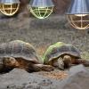 Żółwie w solarium :)