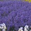 Kwiatki z gdyńskiej rabat<br />ki dla Ciebie Basieńko w <br />rewanżu. ✿❀✿❀✿  :: ✿❀✿❀✿ Kwiatki rabatkowe ✿<br />❀✿❀✿             Pozdrawi<br />am serdecznie !  ~✿~❀~✿~