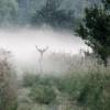Dotknąć mgły.........