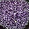Lato kwiatów Otmuchów 201<br />7