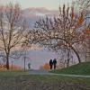 Gdy miłość kwitnie nawet <br />drzewa się kłaniają :)