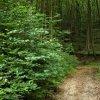 Wąską dróżką poprzez las.<br />.. ::