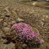 Życie na skałach