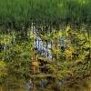 Zarastające, ginące jezio<br />ro Strzyżyny Małe... ::          Ukryte pośród so<br />snowych lasów w Borach Tu<br />cholskich, między Zamrzen<br />icą, a Klonowem jezi