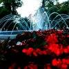 fontanna w Świdnicy :: Zwiedzanie  między występami :)