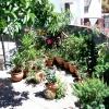 Tarasowy ogród botaniczny<br />! ::
