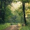 Leśne smugi  :: Pogodnego wtorku :)