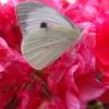 W życiu zawsze trzeba wol<br />nym być.....jak motyl, dl<br />a Ciebie droga przyjaciół<br />ko 🌹 :: Pozdrawiam ciepło Wszystk<br />ich odwiedzających 🌸💐🌼  J<br />estem na urlopie, buziaki<br /> przesyłam �