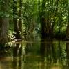 w cieniu drzew.....dla Ci<br />ebie Elu....bo lubisz:))