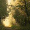 Światłem malowane :)