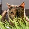 kiler w trawie