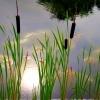 Wiem dlaczego słońca brak<br />:)  wpadło do wody ze zdz<br />iwienia widząc co się dzi<br />eje na naszej ziemi .