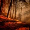 Sleeping Sun... ::