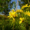 Polne kwiatki ;)