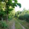 Leśne wędrówki ;)