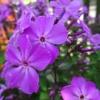 Kwiatuszki ;) makro ;)