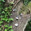 Drzewo mnie obserwuje!!  <br />to nie moje &quot;dzieło&<br />quot; - znalezione w lesi<br />e. Pozdrawiam