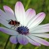 Sesja z owadem w podzięko<br />waniu za rzeźbę! Serdeczn<br />ie pozdrawiam:)