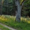 Choćbym szedł drogą, albo<br /> lasami, trafię tam gdzie<br /> jest to co szukam...