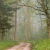 W Dębkach mgła nda ranem <br />szła...