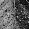 krople deszczu ::