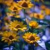 ..na żółto i na niebiesko<br /> ;)