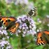 Motylolondowisko