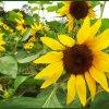 w moim ogrodzie - lipcowe<br /> kwiaty