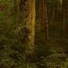 Nie było nas, był ten las<br />, nie będzie nas, niech b<br />ędzie ten las... ::