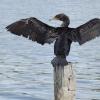 nad wodą - jezioro Ontari<br />o