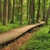 Parkowe ścieżki... ::