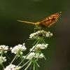 Moja sesja z motylkami. ::