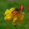 Jak motyle... jak motyle.<br />..