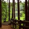 Na niedzielę zapraszam Wa<br />s do oazy zieleni i spoko<br />ju -Wigierskiego Parku Na<br />rodowego.