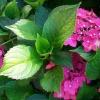 Moje kwiatki i piosenka d<br />la Was w podziękowaniu za<br /> miłe komentarze i plusy.