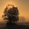 Drzewko szczęścia dla Cie<br />bie w podziękowaniu za de<br />dykacją, pozdrawiam:) ::