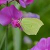 Czas motyli... nie musi k<br />ończyć się z nastaniem je<br />sieni...