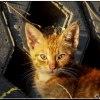 POMARAŃCZOWY SMUTNY KOTEK :: Jeszcze przed chwilą, kot<br />ki wesoło się bawiły. Ten<br /> maluszek, przypatrywał m<br />i się, gdy robiłem