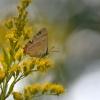 opowieści  z łąki..    z<br /> letnimi  pozdrowieniami <br /> i podziękowaniem  za  mi<br />łą obecność       w mojej<br /> galerii:)