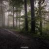 Tajemniczy las