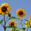 Z pozdrowieniami,słoneczn<br />ego dnia życzę,bez kropli<br /> deszczu... :)