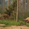 Lasy na brzegach Bałtyku.<br />..