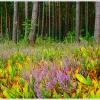 A w lesie już jesień.