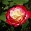 Elu pogoda u nas jesienna<br /> ale ten kwiat jest bardz<br />o letni :)
