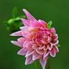 Kwiatek na dzień dobry dl<br />a Was