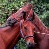 Zakochani... :: -co się tak lampisz?-ja?-<br />ty koniu ....- ooo...prze<br />praszam bardzo ja nie jes<br />tem koniem tylko człowi