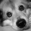 Psi smutek...