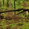 Ciąg dalszy fotozabawy pr<br />zy jednym drzewie... :: http://borowiak.flog.pl/w<br />pis/12113421/fotozabawa-p<br />rzy-jednym-drzewie#w