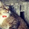 Kot marzyciel ::