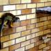 Opolskie zoo :: Opolskie zoo Małpka w opo<br />lskim zoo, bardzo żywa, c<br />iężko było ją uchwycić :-<br />)